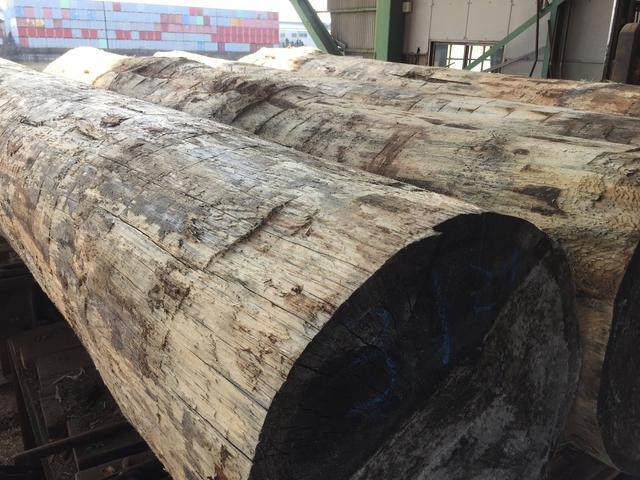 色々な木材の面白さ